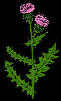 flowers-31452__340